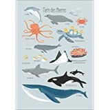 Poster Affiche Animaux Dauphins Mer