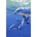 Poster Affiche Animaux Dauphins Happy