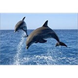 Poster Affiche Animaux Dauphins Saut Mer