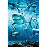 Poster Affiche Animaux marins Requins