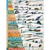 Poster Affiche Animaux Dinosaures Evolution
