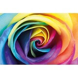 Poster Affiche Nature Fleur Rose multicolore Arc-en-ciel