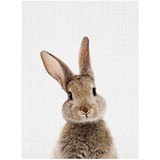 Poster Affiche Animaux Lapin Coucou Couleurs