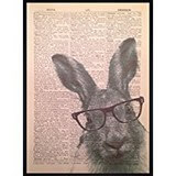Poster Affiche Animaux Lapin Lunette Dictionnaire
