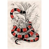 Poster Affiche Animaux Reptile Serpent corail