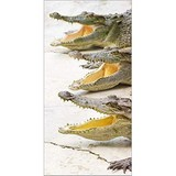Poster Affiche Animaux Reptiles Alligators