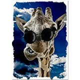 Poster Affiche Animaux rigolos Humour Girafe Lunettes