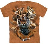 T-shirts Animaux Félins Tigres
