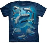 T-shirts Animaux Mer Requins bande