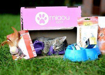 Miaoubox : la box (boîte-cadeau) pour chats